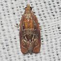Hodges#2751 - Zomaria andromedana