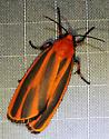 Scarlet-winged Lichen Moth_Hypoprepia miniata - Hypoprepia