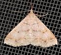 Renia flavipunctalis