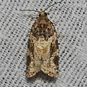 Kimball's Leafroller Moth - Hodges#3600 - Argyrotaenia