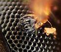 Mite on ant 2, crop - Antennophorus - female