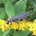 Katydid Wasp - Sphex nudus