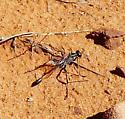 Wasp Fay Canyon Sedona - Ammophila