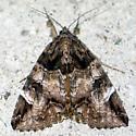 Locust Underwing - Euparthenos nubilis - male