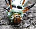Hickory Horned Devil or  Regal Moth - Hodges#7706 - Citheronia regalis