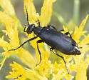Beetle ID