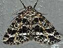 6430 – Orthofidonia flavivenata – Yellow-veined Geometer Moth - Orthofidonia flavivenata
