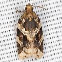 Red-banded Leafroller Moth - Hodges #3597 - Argyrotaenia velutinana - male