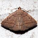 Zanclognatha cruralis