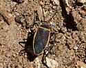 Bug near Volcan Mountain - Largus