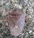 Dusky Stink Bug - Euschistus tristigmus