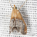 Sooty-winged Chalcoela - Hodges #4895 - Chalcoela iphitalis