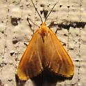 Orange Beggar, #7444 - Eubaphe unicolor