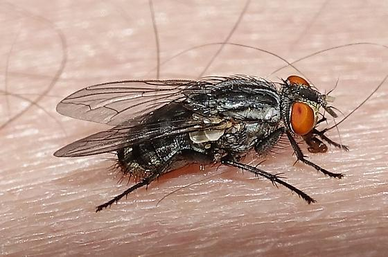 Fly from Oregon