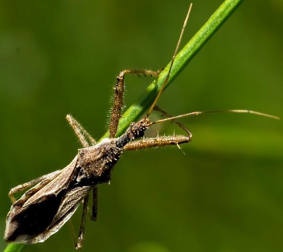 Unknown 'Bug' 6022 - Sinea