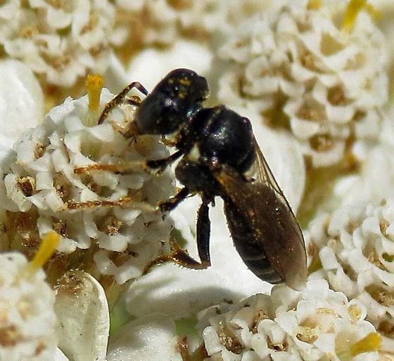 Micro Wasp?