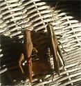 Obscura and Rubiginosa males - Schistocerca rubiginosa - male