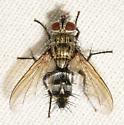 fly080517b