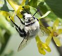 Digger Bee?