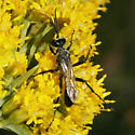 Sphecidae? - Prionyx