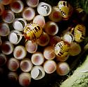 insect eggs with perforation, a few years ago