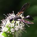 Thread-waisted Wasp? - Isodontia mexicana