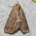 Small Necklace Moth - Hodges#8528  - Hypsoropha hormos