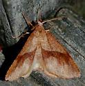 American Barred Umber? - Plagodis pulveraria - male