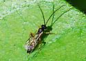 Small wasp seeks ID - male