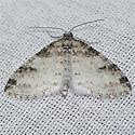 Powdered Bigwig Moth? - Lobophora nivigerata