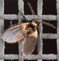 Moth Fly?