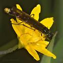 Stem Sawfly 3 - Calameuta clavata - male