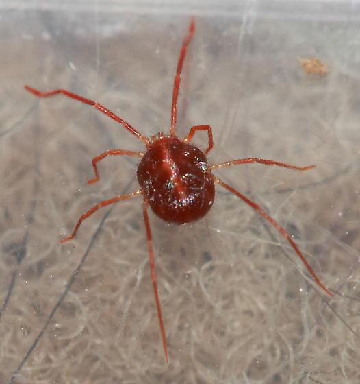 Spider Mite ?