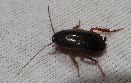 farmapest hamamböceği yumurtası resimleri ile ilgili görsel sonucu
