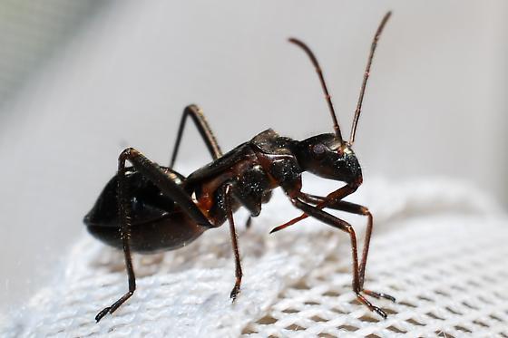 Ant mimic?