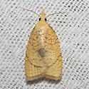 Hodges#3721 - Cenopis mesospila