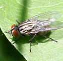 Fly ID Request - Ravinia
