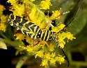 Locust borer ? - Megacyllene robiniae