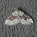 Xanthorhoe alticolata