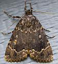 brown moth ID? - Amphipyra pyramidoides