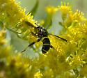 Similar to Doros? - Spilomyia sayi