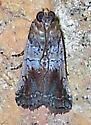 Chararica hystriculella