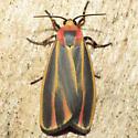 8090 Painted Lichen Moth - Hypoprepia fucosa