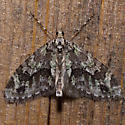 7637 Mottled Gray Carpet - Cladara limitaria