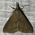 Renia adspergillus - female