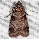 Sweetgum Leafroller Moth - Sciota uvinella