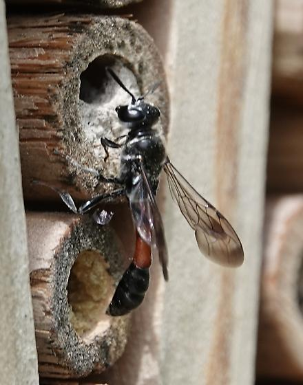 Small wasp in