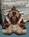 Pink-barred Pseudeustrotia - Pseudeustrotia carneola