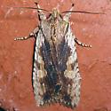 Wanton Pinion - Hodges#9889 - Lithophane petulca
