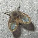 Filter Fly